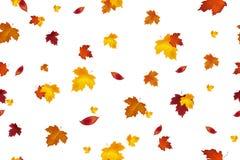 Σχέδιο υποβάθρου φθινοπώρου πρότυπο άνευ ραφής Μειωμένα κόκκινα, κίτρινα, πορτοκαλιά και καφετιά φύλλα φθινοπώρου που απομονώνοντ απεικόνιση αποθεμάτων