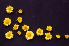 Κίτρινο λουλούδι χρυσάνθεμων στοκ φωτογραφίες