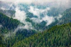 Σχέδιο φύσης του πολύβλαστου πράσινου δάσους κωνοφόρων στοκ φωτογραφίες