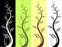 σχέδιο floral Στοκ Φωτογραφίες