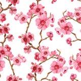 Σχέδιο Seamles με το sakura Διανυσματική απεικόνιση