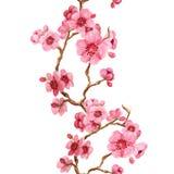 Σχέδιο Seamles με το sakura Ελεύθερη απεικόνιση δικαιώματος