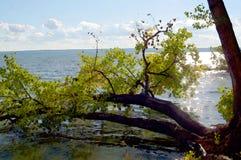 Σχέδιο Watercolor Δάσος, κλάδοι δέντρων, λίμνη και ουρανός στοκ φωτογραφίες