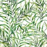 Σχέδιο Watercolor με τα θαυμάσια φύλλα φοινίκων Το χέρι χρωμάτισε τον εξωτικό κλάδο πρασινάδων Βοτανική απεικόνιση ξέν. απεικόνιση αποθεμάτων