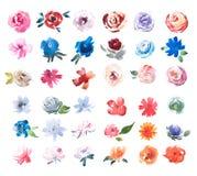Σχέδιο Watercolor της φρέσκιας ζωγραφικής ακουαρελών λουλουδιών θερινών λιβαδιών απεικόνιση αποθεμάτων