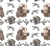 Σχέδιο Watercolor - lIrish ρυθμιστής και σκυλί Kurzhaar διανυσματική απεικόνιση