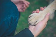 Σχέση μεταξύ του ανθρώπου και του σκυλιού στοκ φωτογραφίες