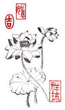 Σχέδια κινεζικός-ύφους, σκίτσα, Lotus, κρίνος νερού Στοκ Εικόνες