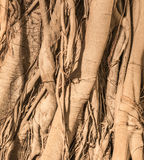 Σχέδια του δέντρου Στοκ Φωτογραφία