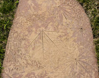Σχέδια φυλλώματος σε ένα πάτωμα τσιμέντου, και μεγάλο και μικρό με το λι Στοκ φωτογραφίες με δικαίωμα ελεύθερης χρήσης