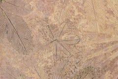 Σχέδια φυλλώματος σε ένα τσιμέντο που διαδίδεται Στοκ εικόνες με δικαίωμα ελεύθερης χρήσης