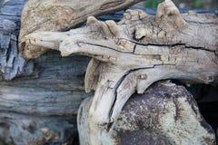 Σχέδια Driftwood στοκ εικόνες με δικαίωμα ελεύθερης χρήσης