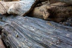 Σχέδια Driftwood στοκ εικόνες