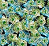 Σχέδιο άδειας Peacock Στοκ εικόνα με δικαίωμα ελεύθερης χρήσης