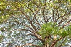 σχέδιο δέντρων κλάδων Στοκ Φωτογραφίες