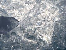 Σχέδιο από τα bubles και φως στην επιφάνεια πάγου Στοκ Εικόνα