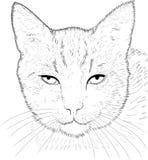 σχέδιο γατών Στοκ Εικόνα