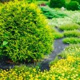 Σχέδιο εξωραϊσμού κήπων Κρεβάτι λουλουδιών, πράσινα δέντρα Στοκ εικόνα με δικαίωμα ελεύθερης χρήσης
