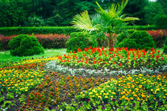 Σχέδιο εξωραϊσμού κήπων Κρεβάτι λουλουδιών, πράσινα δέντρα Στοκ Εικόνα