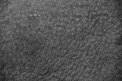 Σχέδιο δερμάτων ρινοκέρων γραπτό. Στοκ Φωτογραφία