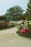 Σχέδιο θερινών κήπων στοκ φωτογραφίες