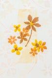 Σχέδιο κεραμιδιών λουτρών Στοκ Εικόνα