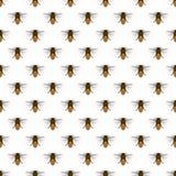 Σχέδιο μελισσών Στοκ εικόνα με δικαίωμα ελεύθερης χρήσης
