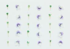 Σχέδιο με τα μπλε πέταλα λουλουδιών και τα πράσινα φύλλα σε ένα άσπρο υπόβαθρο Στοκ Φωτογραφίες