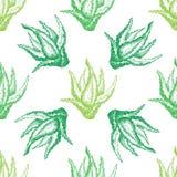 Σχέδιο με aloe Βέρα για τη διακόσμηση Στοκ Φωτογραφία
