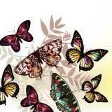 Σχέδιο μόδας πεταλούδων Στοκ Εικόνες