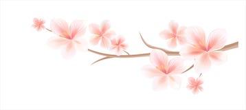 Σχέδιο λουλουδιών Κλάδος του sakura τα λουλούδια που απομονώνονται με στο λευκό Κλάδος ανθών κερασιών με τα λουλούδια Στοκ εικόνα με δικαίωμα ελεύθερης χρήσης