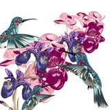 Σχέδιο λουλουδιών με τα κολίβρια, τις ορχιδέες και τις ίριδες Στοκ φωτογραφίες με δικαίωμα ελεύθερης χρήσης