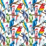 Σχέδιο παπαγάλων Watercolor Στοκ εικόνες με δικαίωμα ελεύθερης χρήσης