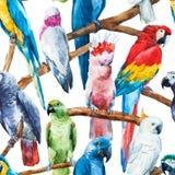 Σχέδιο παπαγάλων Watercolor Στοκ Εικόνες