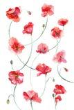Σχέδιο παπαρουνών Watercolor Στοκ Φωτογραφίες