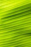 Σχέδιο στα φύλλα μπανανών Στοκ Εικόνα
