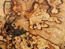 σχέδιο στο κολόβωμα δέντρων (σύσταση) Στοκ Εικόνα