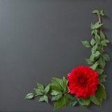 Σχέδιο συνόρων λουλουδιών Στοκ Εικόνες