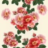 Σχέδιο ταπετσαριών με τα τριαντάφυλλα Στοκ Εικόνα