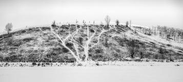 Σχέδιο της φύσης Στοκ εικόνα με δικαίωμα ελεύθερης χρήσης