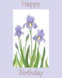 Σχέδιο της Iris Στοκ εικόνα με δικαίωμα ελεύθερης χρήσης