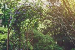 Σχέδιο τοπίων, αειθαλή δέντρα έλατου και λουλούδια Στοκ φωτογραφίες με δικαίωμα ελεύθερης χρήσης