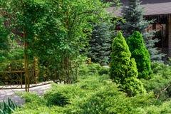 Σχέδιο τοπίων, αειθαλείς δέντρα έλατου και θάμνοι Στοκ εικόνες με δικαίωμα ελεύθερης χρήσης