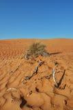 Σχέδιο τοπίων ερήμων άμμου με το Μπους και τους κλάδους Στοκ φωτογραφία με δικαίωμα ελεύθερης χρήσης