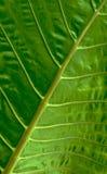Σχέδιο του κλάδου στο πράσινο φύλλο Στοκ φωτογραφία με δικαίωμα ελεύθερης χρήσης