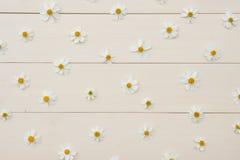 Σχέδιο των άσπρων ισπανικών λουλουδιών βελόνων Στοκ Φωτογραφία