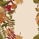 Σχέδιο φθινοπώρου το φθινόπωρο αφήνει το πρότ&up Κόκκινα, κίτρινα και πράσινα φύλλα των δασικών δέντρων σύνορα άνευ ραφής Χρήση ω Στοκ Εικόνες