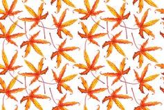 Σχέδιο φθινοπώρου φύλλων σφενδάμου Στοκ Φωτογραφίες