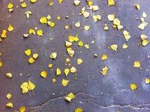 Σχέδιο φθινοπώρου Στοκ εικόνες με δικαίωμα ελεύθερης χρήσης