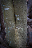 Σχέδιο φύσης στον κορμό 3 δέντρων Στοκ Εικόνες